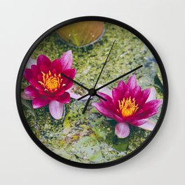 Flower. Red Water-lily (Nymphaea 'James Brydon'). Norfolk, UK. Wall Clock
