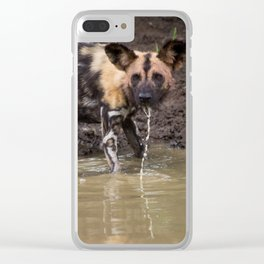 Wild Dog Drinking Clear iPhone Case