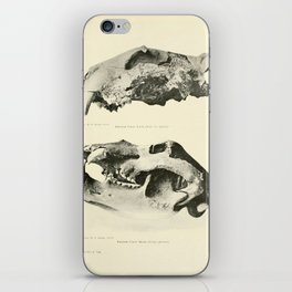 Savor iPhone Skin