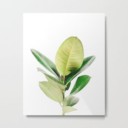 Rubber tree Metal Print