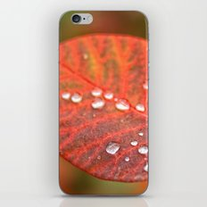 Red leaf2 iPhone & iPod Skin