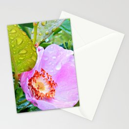 Raindrops & Roses Stationery Cards