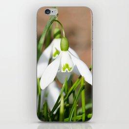 Snowdrop macro iPhone Skin