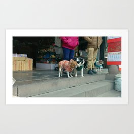 Dogs in Coats at Wenshu Temple Art Print