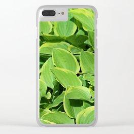 Hosta -Golden Tiara Hostaceae Clear iPhone Case