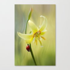 Lily lady Canvas Print