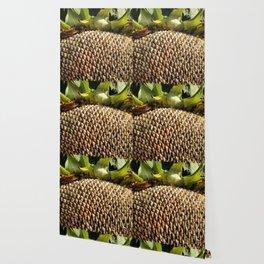 Sunflower Seeds Wallpaper