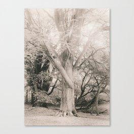 Corstorphine Hill. Evening. Canvas Print