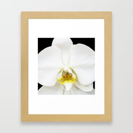 In Black And White Orchid Framed Art Print