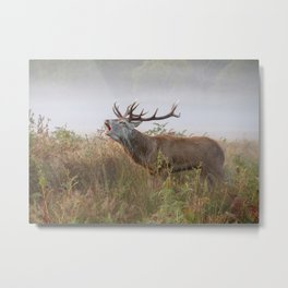 Rutting Season - Richmond Park Metal Print