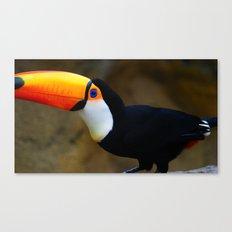 Toucan 2 Canvas Print
