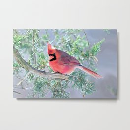 Cold Winter's Day Cardinal Metal Print