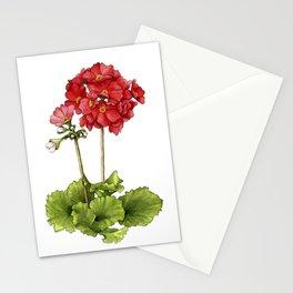 Japanese Primrose Stationery Cards