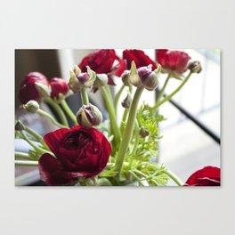 Ranunculus Red  Canvas Print