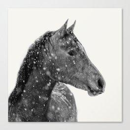 Horse Animal Photography Canvas Print