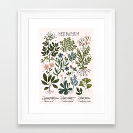 Herbarium ~ vintage inspired botanical art print ~ white Framed Art Print