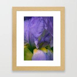 Lavender Iris Framed Art Print
