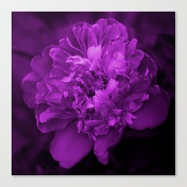 Peony In Ultra Violet Color #decor #society6 #buyart Canvas Print