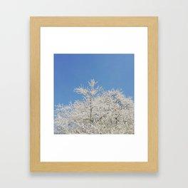 White blossoms in Stuttgart, Germany Framed Art Print