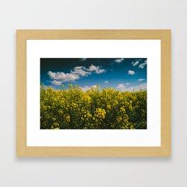 Summer Gold Framed Art Print