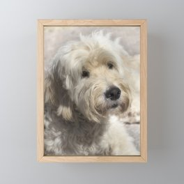 Dog Goldendoodle Golden Doodle Framed Mini Art Print