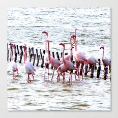 Flamingos dancing Canvas Print