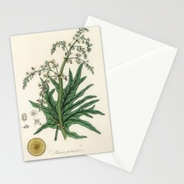 Chinese rhubarb (Rheum palmatum) illustration from Medical Botany (1836) by John Stephenson and Jame Stationery Cards