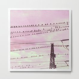 The flock watchs the sunset Metal Print
