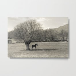 The horse and the tree Metal Print