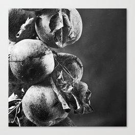 Big Apples Canvas Print
