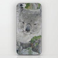 koala iPhone & iPod Skins featuring Koala by Cordula Kerlikowski
