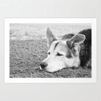 husky Art Prints featuring husky by MrBdigital