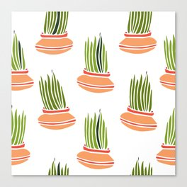Lemongrass in Pots 3 Canvas Print