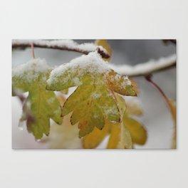 Snow, So Soon Canvas Print