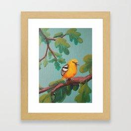 Summer: Baltimo Oriole (Female) Framed Art Print