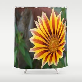 Close Up Tiger Gazania in Red, Gold and Green  Shower Curtain