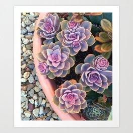 echeveria planter Art Print