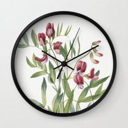 Wild Pea (Lathyrus decaphyllus) (1938) by Mary Vaux Walcott Wall Clock