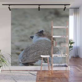 Snowy Plover Scan Wall Mural