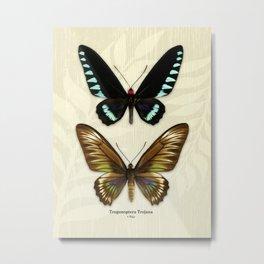 Butterfly16_Trogonoptera Trojana • Pair Metal Print