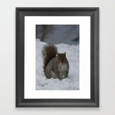 Squirrel in the snow  Framed Art Print