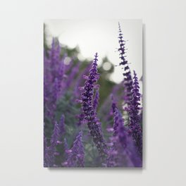 Long Purple Flowers Metal Print