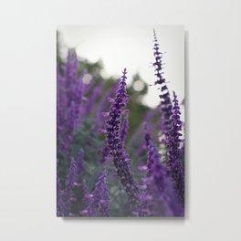Long Purple Flowers Metal Print