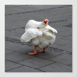 Goose Talk Canvas Print