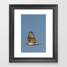 Ferrougenous Hawk Framed Art Print