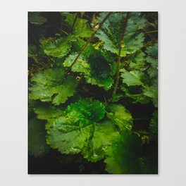 Wet Greens Canvas Print