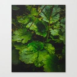 Wet Greens Canvas Print