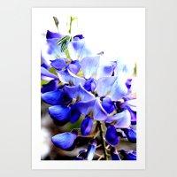 Wisteria Blossoms Blue Art Print
