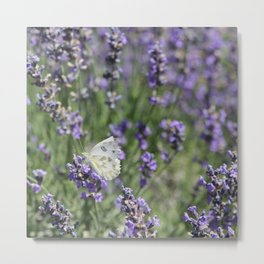 Lavender Flutter Metal Print