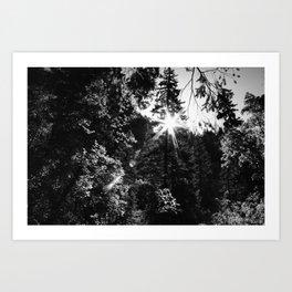 Mountainside Radiance Art Print